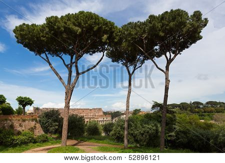 Trees Overlooking The Colosseum