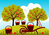 image of hand-barrow  - vector hand barrow and baskets of apples in apple orchard - JPG
