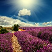 stock photo of plateau  - Beautiful image of lavender field - JPG