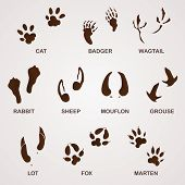 stock photo of animal footprint  - Foot paw and animal footprints in brown on white background - JPG
