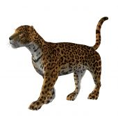 picture of ocelot  - Jaguar standing waiting on a white background - JPG