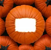 picture of centerpiece  - Pumpkin blank sign as a Halloween and thanksgiving celebration concept as a group of orange pumpkins and a centerpiece with a white copy space frame for a harvest time celebration message - JPG