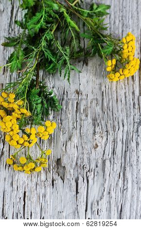 Tansy On The Wooden Background
