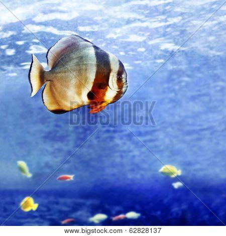 Beautiful tropical fish