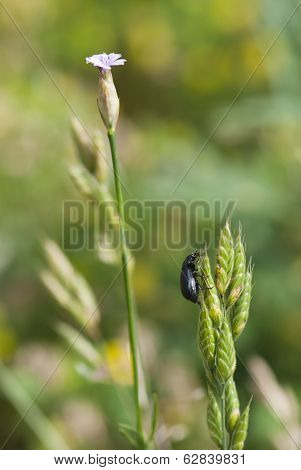 Crawly Beetle