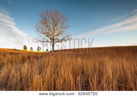 Virginia Grasslands Lone Tree at Manassas National Battlefield Park