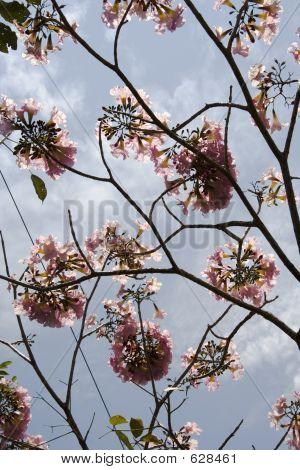 Pink Flower Tree Close-up
