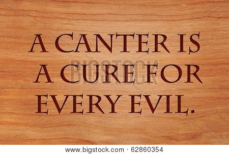 A canter is a cure for every evil - quote by Benjamin Disraeli on wooden red oak background