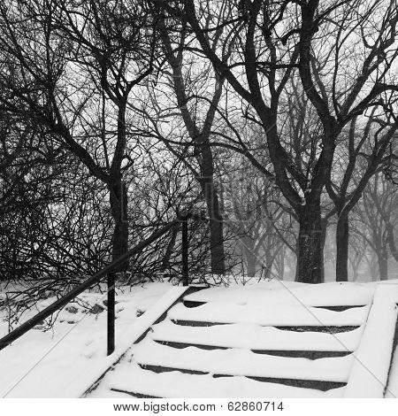 Park During Snowstorm
