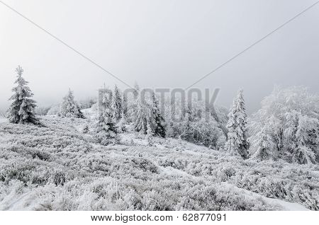 Winter In Mountains On Foggy Overcast Day