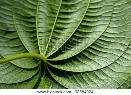 beautiful Image of a closeup Tropical leaf