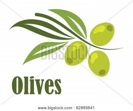Green olives branch