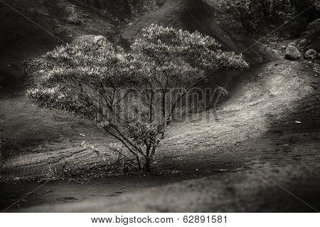 A beautiful tree in the Waimea  canyon area of kauai
