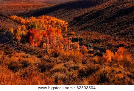A view of a valley in Yosemite with Fall aspen Bloom