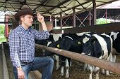 stock photo of animal husbandry  - Cowboy watching the cows on a farm - JPG