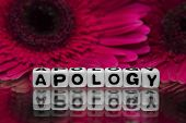 picture of apologize  - Apology with pink flowers in the background - JPG