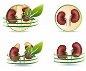 Great Collection Of Human Kidneys Health Care Symbols