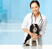 image of veterinary  - Young positive brunette veterinary woman with spaniel  - JPG