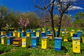 pic of beehives  - Blue and yellow beehives in garden on a sunny day - JPG