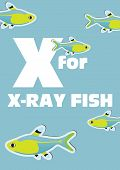 picture of x-ray fish  - X for the X - JPG