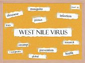 West Nile Virus Corkboard Word Concept
