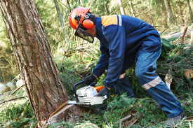 stock photo of cutting trees  - Lumberjack logger worker in protective gear cutting firewood timber tree in forest with chainsaw - JPG
