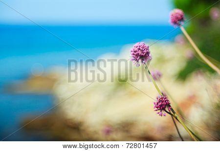 Alium Cepa Flower