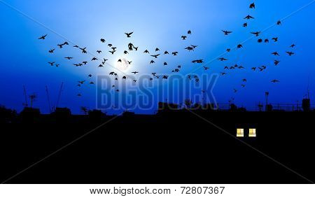Birds With Full Moon Over City Rooftops