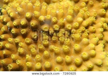 texture of coral reef
