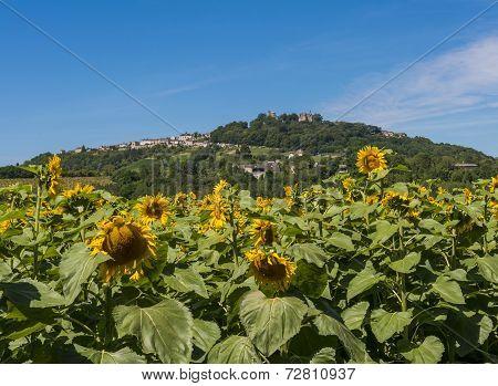 Hill Of Sancerre Wine District