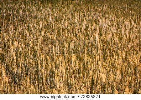 Grassy Background