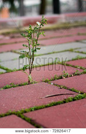 Weeds Growing