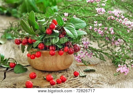 Cowberries And Common Heather Flowers On Rustic Surface