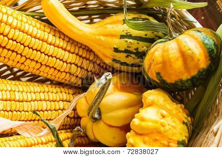 Autumn corn and gourds
