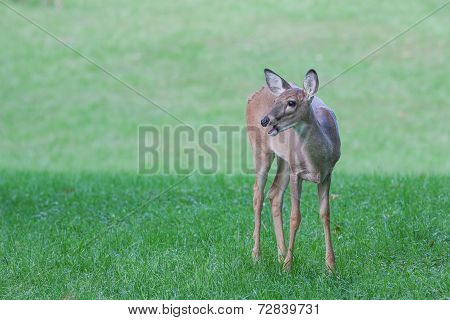 A Deer With Something To Say