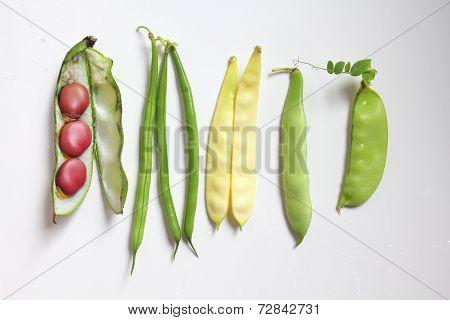 Leagumes Beans
