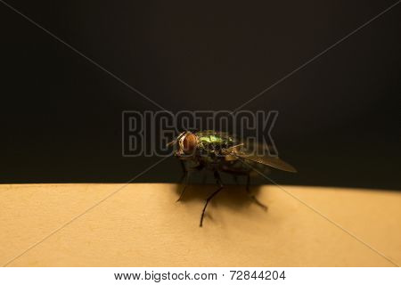 Green Fly On Music Score