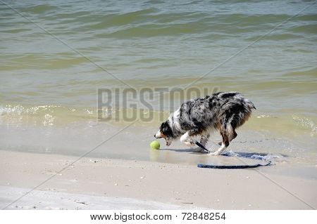 Fetching On The Beach
