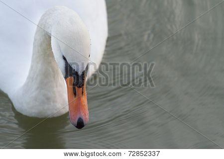 Swans Way