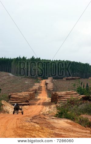 Wood Exploitation