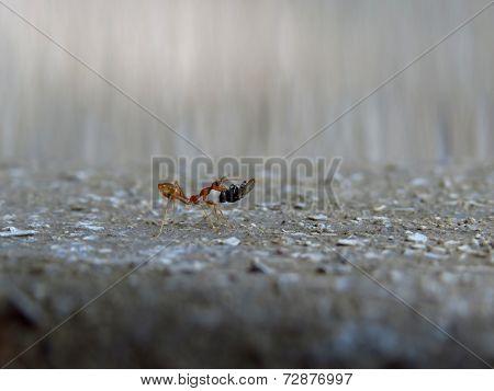 Hardworking Ant