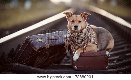 Dog On Rails With Suitcases.