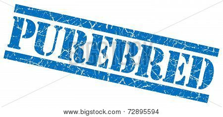 Purebred Blue Grunge Stamp Isolated On White