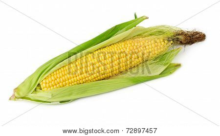 Corn On The Cob Isolated