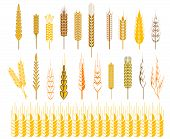 image of staples  - Set of icons of ripe golden ears of wheat and cereals conceptual of farming - JPG