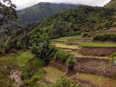 image of nepali  - Flooded paddy fields of rice during the monsoon in the lower Annapurna Region Nepali Himalayas - JPG