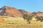 picture of dune grass  - Grass dune and mountain landscape near Sossusvlei Namibia - JPG