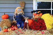 pic of scarecrow  - Scarecrow Harvest and Flowers Pumpkins Corn  - JPG