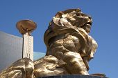 Lion at the MGM in Las Vegas