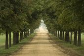 image of dirt road  - long tree lined rural dirt road - JPG